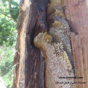 عسل درختی کردستان صد در صد طبیعی و بدون دخالت انسان