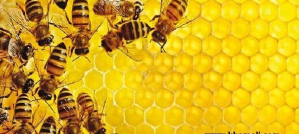 نحوه تولید عسل طبیعی و علت فساد ناپذیری آن