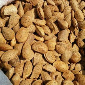 قیمت بادام درختی کردستان